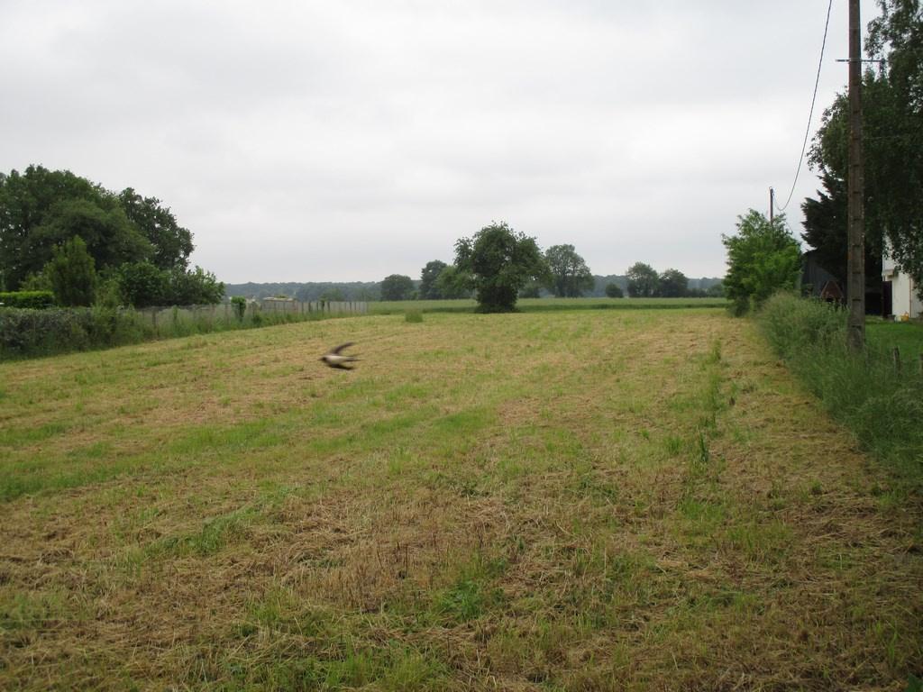 Offres de vente Terrain Sevres anxaumont (86800)
